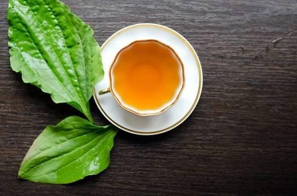 thé vert tuocha maigrir